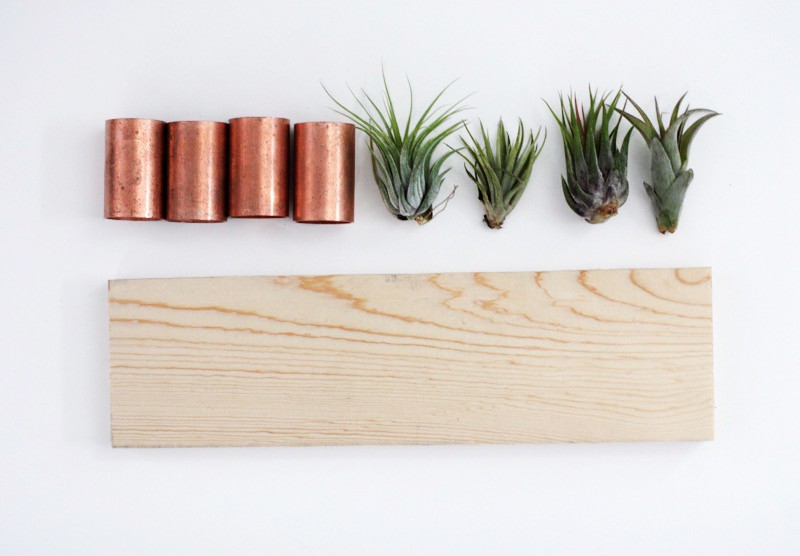 Diy air plant wall art for Air plant wall art