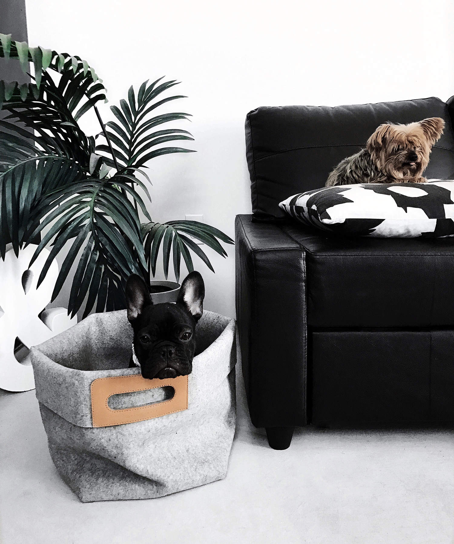fashionlush, graf lantz, french bulldog, minimal decor