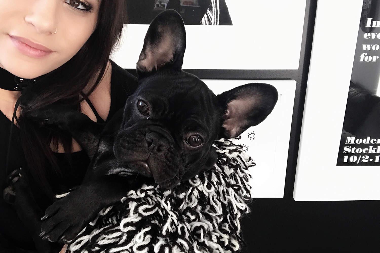 fashionlush, this & that, french bulldog
